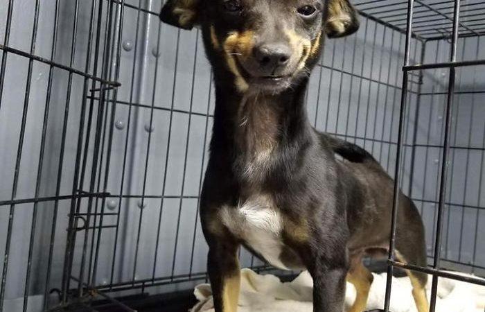หมาหน้ายิ้ม จากศูนย์พักพิงสัตว์
