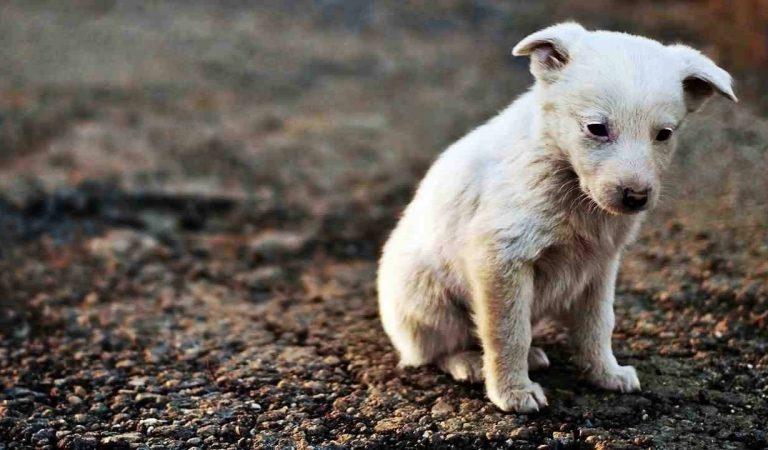 ข้อควรรู้ก่อนที่จะรับหมาจรจัดมาเลี้ยง