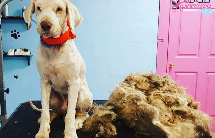 เจ้าของร้านตัดขนสัตว์ ช่วยเปลี่ยนชีวิตหมาจรจัด