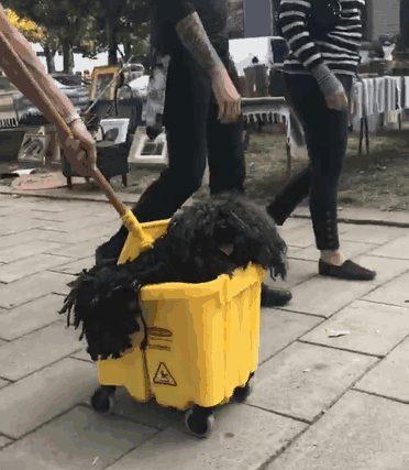 หมาที่แต่งฮาโลวีน โดยที่ไม่ต้องแต่งอะไรเลย
